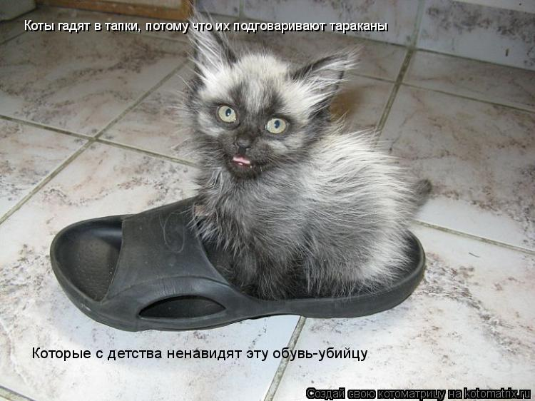 Котоматрица: Коты гадят в тапки, потому что их подговаривают тараканы Которые с детства ненавидят эту обувь-убийцу