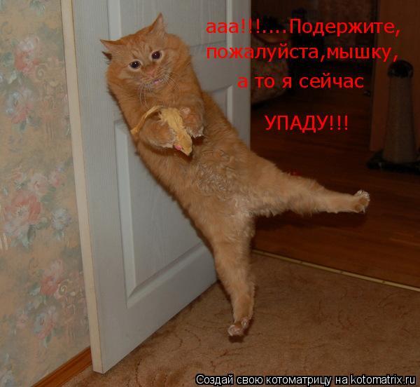 Котоматрица: ааа!!!....Подержите, пожалуйста,мышку, а то я сейчас УПАДУ!!!