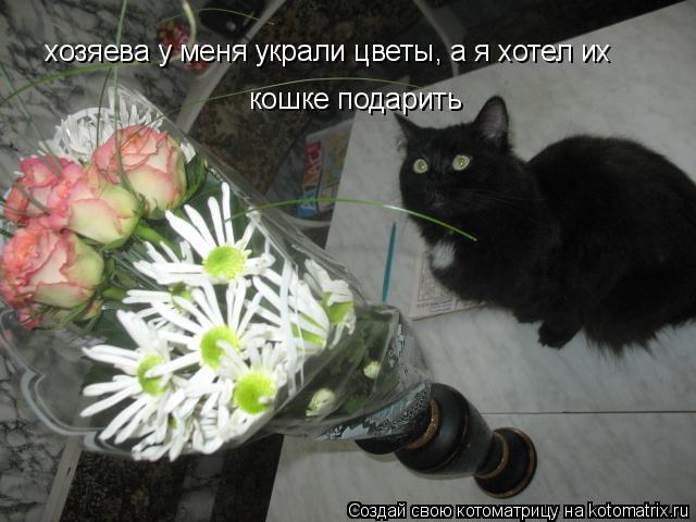 Котоматрица: хозяева у меня украли цветы, а я хотел их  кошке подарить кошке подарить