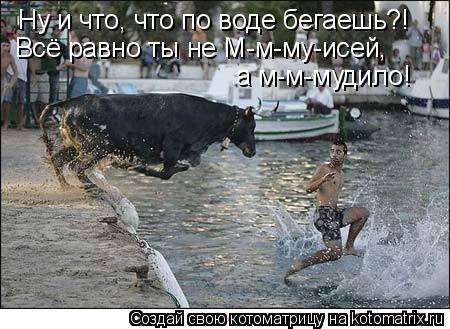 Котоматрица: Ну и что, что по воде бегаешь?! Всё равно ты не М-м-му-исей,  а м-м-мудило!