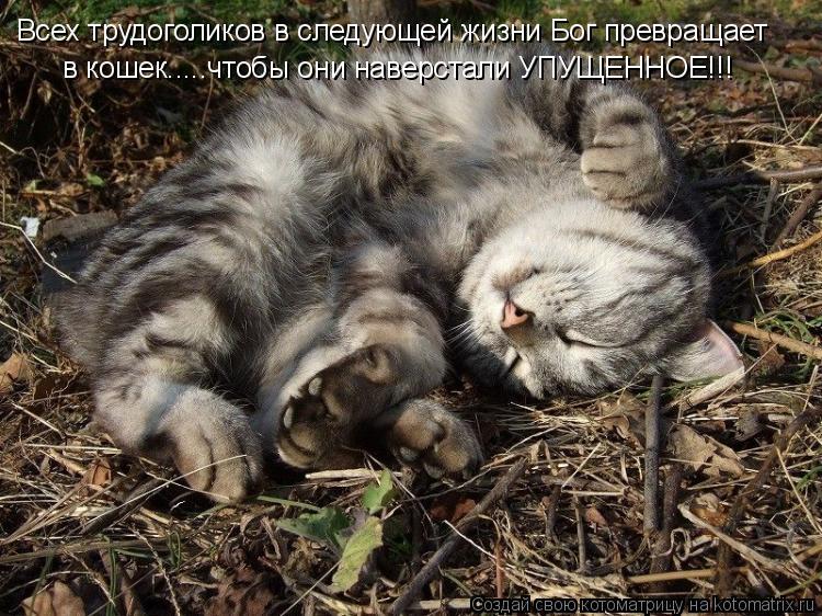 Котоматрица: Всех трудоголиков в следующей жизни Бог превращает в кошек.....чтобы они наверстали УПУЩЕННОЕ!!!