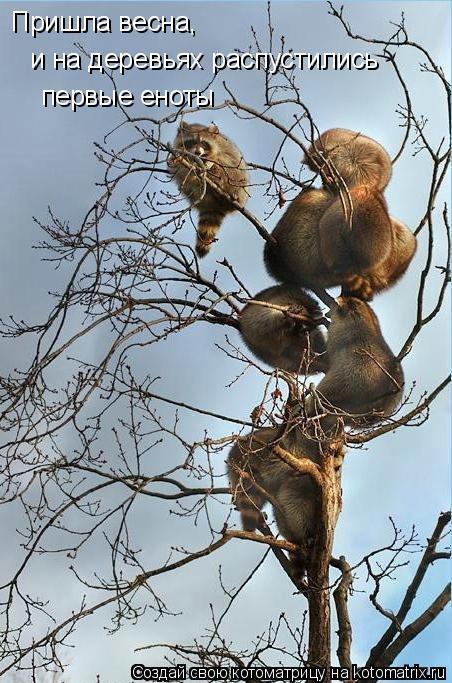 Котоматрица: Пришла весна, и на деревьях распустились первые еноты