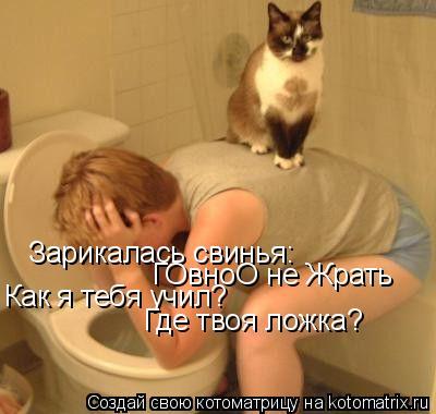 Котоматрица: Зарикалась свинья: ГОвноО не Жрать Как я тебя учил? Где твоя ложка?