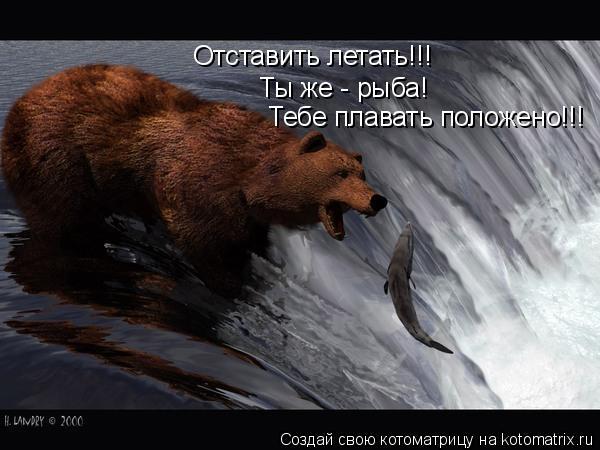 Котоматрица: Отставить летать!!! Ты же - рыба!  Тебе плавать положено!!!
