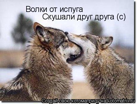 Котоматрица: Волки от испуга Скушали друг друга (с)