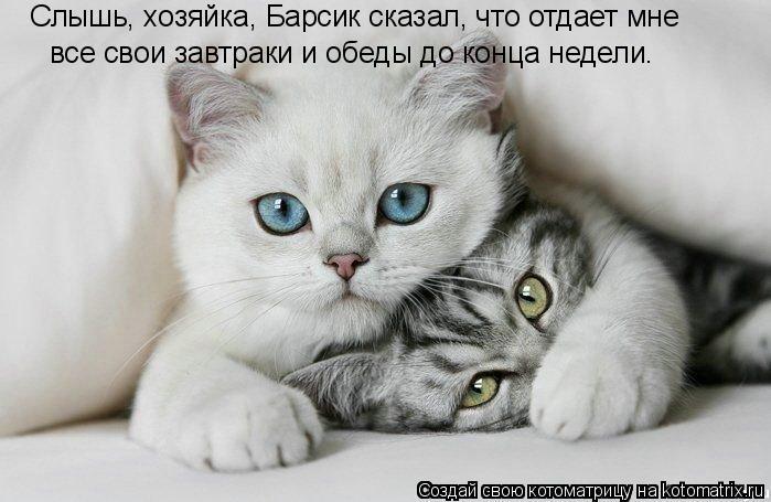 Котоматрица: Слышь, хозяйка, Барсик сказал, что отдает мне все свои завтраки и обеды до конца недели.