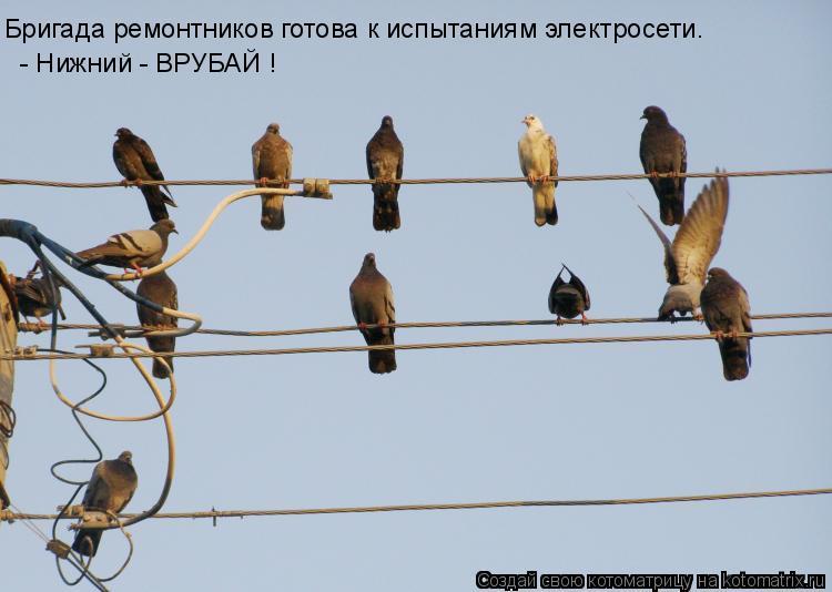 Котоматрица: Бригада ремонтников готова к испытаниям электросети. - Нижний - ВРУБАЙ !