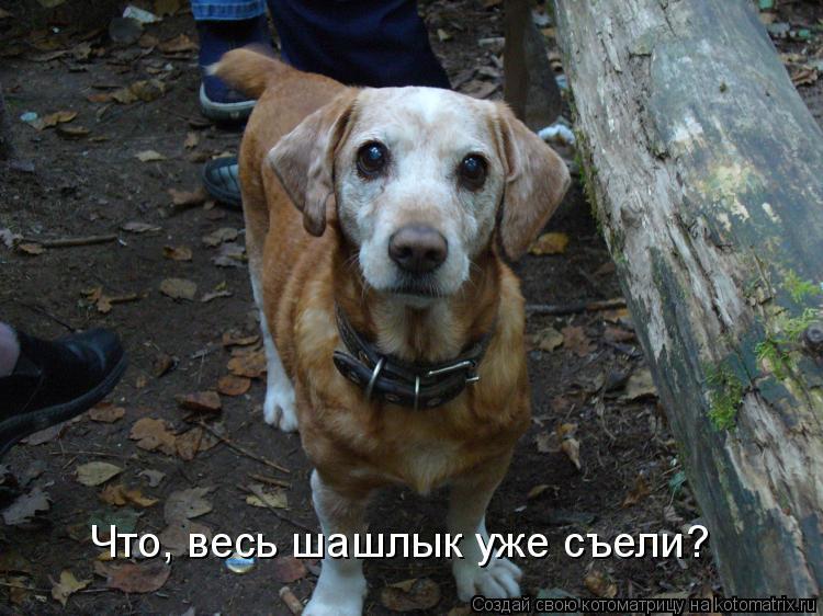 Котоматрица: Что, весь шашлык уже съели?