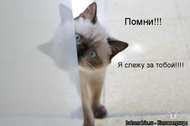 Котоматрица: Помни!!! Я слежу за тобой!!!!