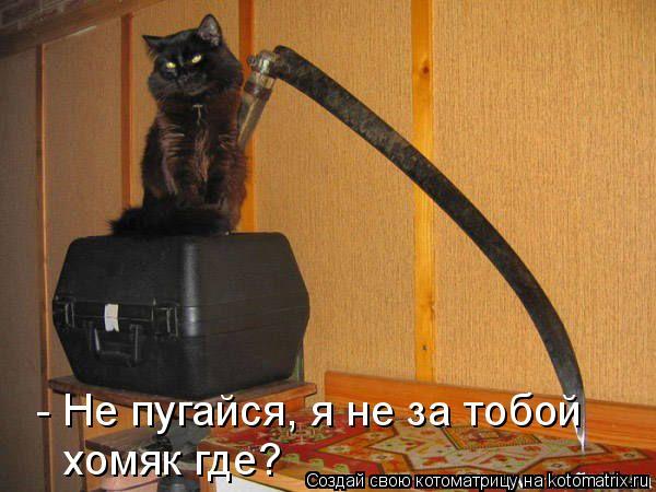 Котоматрица: - Не пугайся, я не за тобой хомяк где?