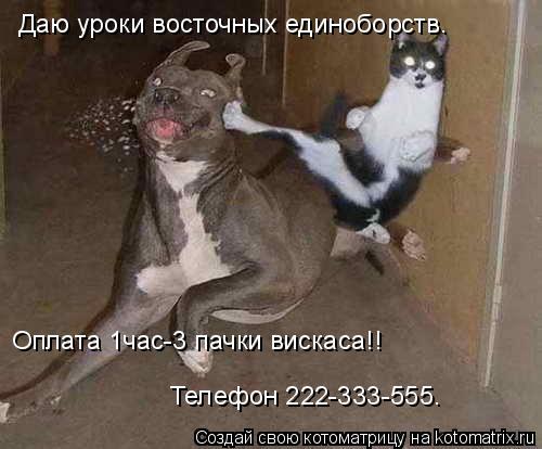 Котоматрица: Даю уроки восточных единоборств. Оплата 1час-3 пачки вискаса!! Телефон 222-333-555.