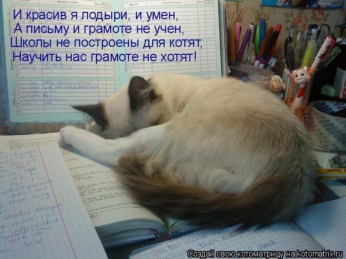 Котоматрица: И красив я лодыри, и умен, А письму и грамоте не учен, Школы не построены для котят, Научить нас грамоте не хотят!