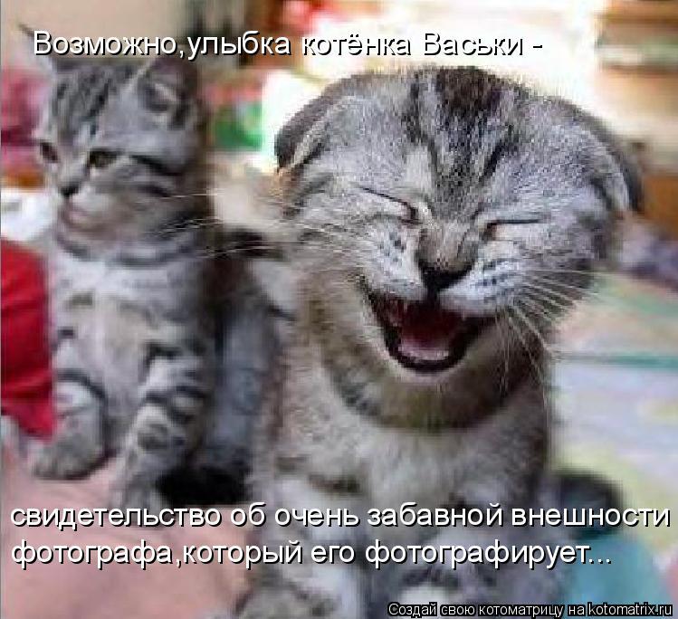 Котоматрица: Возможно,улыбка котёнка Васьки - свидетельство об очень забавной внешности фотографа,который его фотографирует...