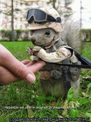 Котоматрица: Награждаю вас,капитан медалью,за обеду над котами!