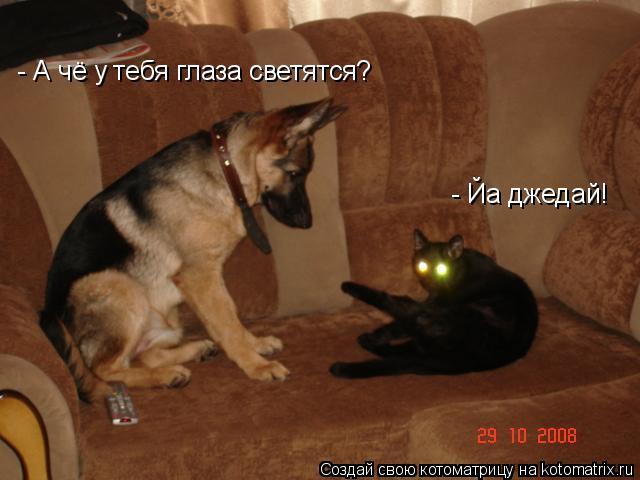 Котоматрица: - Йа джедай! - А чё у тебя глаза светятся?