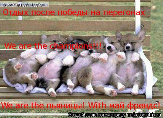 Котоматрица: Отдых после победы на перегонах We are the champions!!! We are the пьяницы! With май френдс!