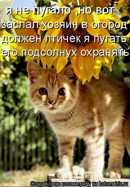 Котоматрица: я не пугало ,но вот заслал хозяин в огород должен птичек я пугать его подсолнух охранять...