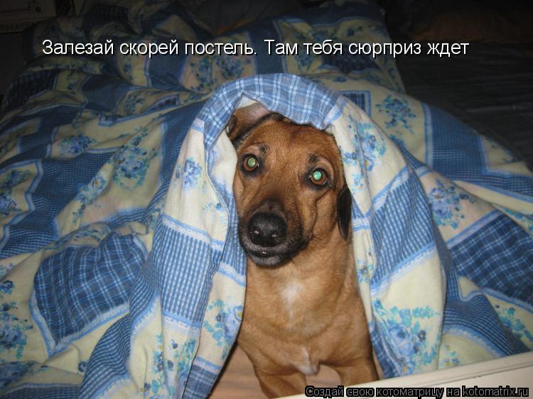 Котоматрица: Залезай скорей постель. Там тебя сюрприз ждет