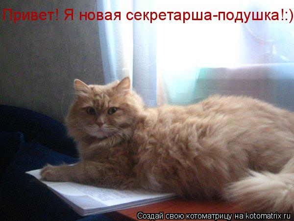 Котоматрица: Привет! Я новая секретарша-подушка!:)
