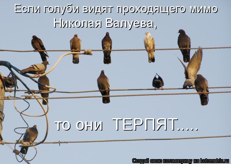 Котоматрица: Если голуби видят проходящего мимо Николая Валуева, то они  ТЕРПЯТ.....