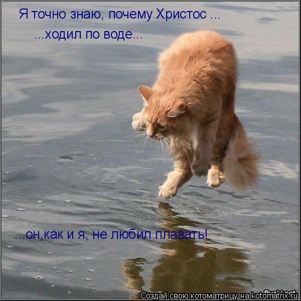 Котоматрица: Я точно знаю, почему Христос ... ...ходил по воде... ...он,как и я, не любил плавать!