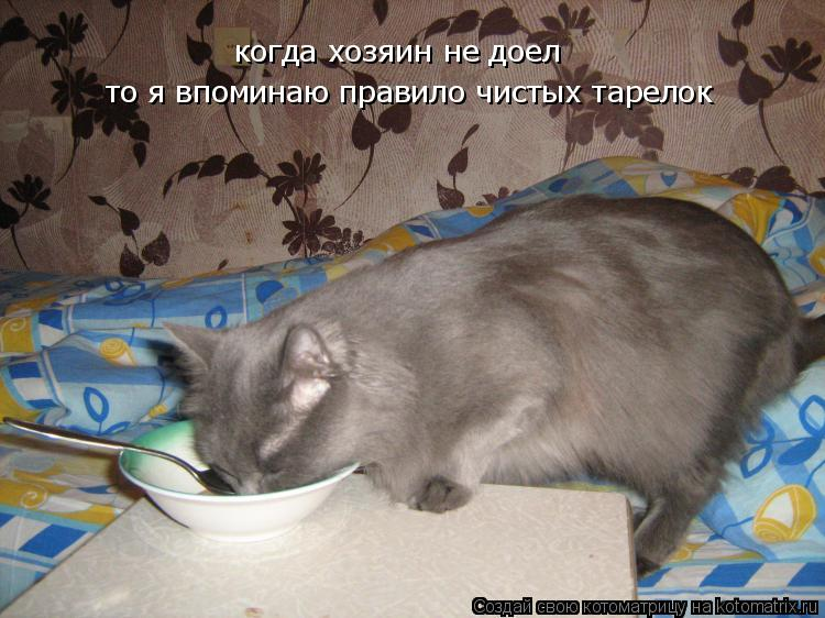 Котоматрица: когда хозяин не доел то я впоминаю правило чистых тарелок