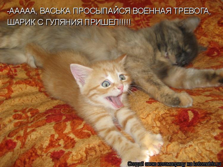 Котоматрица: -ААААА, ВАСЬКА ПРОСЫПАЙСЯ ВОЕННАЯ ТРЕВОГА, ШАРИК С ГУЛЯНИЯ ПРИШЕЛ!!!!!