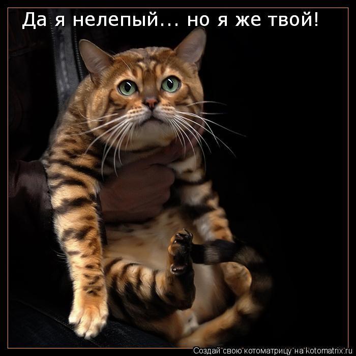 Котоматрица: Да я нелепый... но я же твой! Да я нелепый... но я же твой!