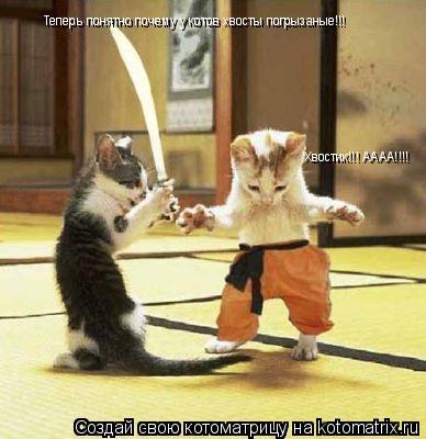 Котоматрица: Теперь понятно почему у котов хвосты погрызаные!!! Хвостик!!! АААА!!!!