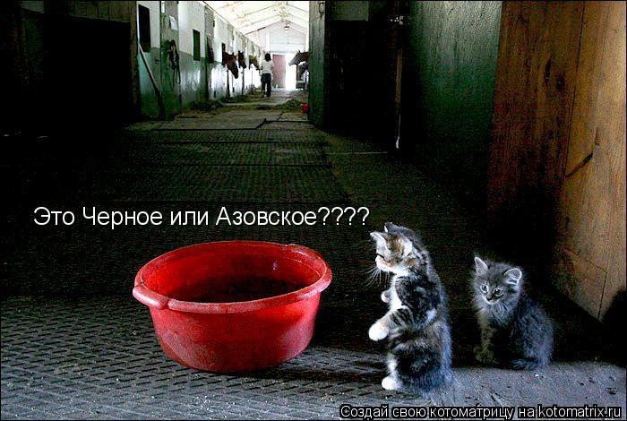 Котоматрица: Это Черное или Азовское????
