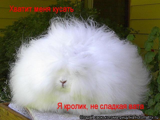 Котоматрица: Хватит меня кусать Я кролик, не сладкая вата