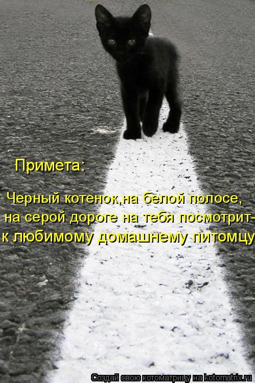 Котоматрица: Примета: Черный котенок,на белой полосе, на серой дороге на тебя посмотрит- к любимому домашнему питомцу!