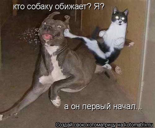 Котоматрица: кто собаку обижает? Я? а он первый начал...