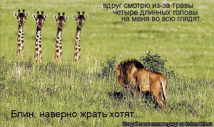 Котоматрица: ...вдруг смотрю из-за травы четыре длинных головы на меня во всю глядят. Блин, наверно жрать хотят...