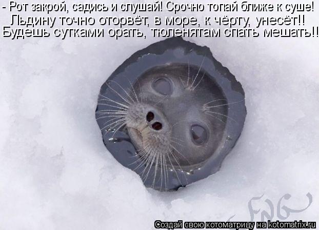 Котоматрица: Льдину точно оторвёт, в море, к чёрту, унесёт!!  Будешь сутками орать, тюленятам спать мешать!!! - Рот закрой, садись и слушай! Срочно топай ближ