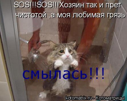 Котоматрица: чистотой ,а моя любимая грязь смылась! SOS!!!SOS!!!Хозяин так и прет смылась!!!