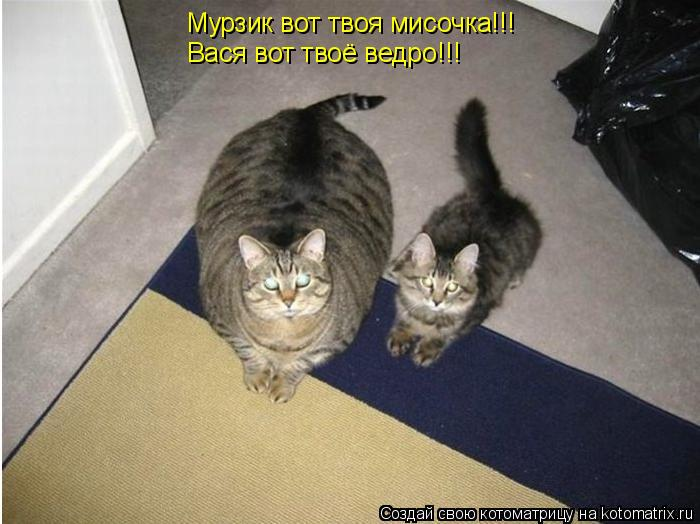 Котоматрица: Мурзик вот твоя мисочка!!! Вася вот твоё ведро!!!