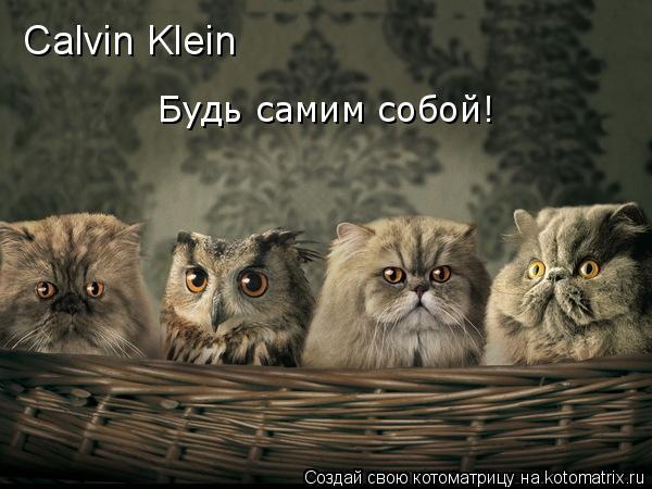 Котоматрица: Будь самим собой! Calvin Klein