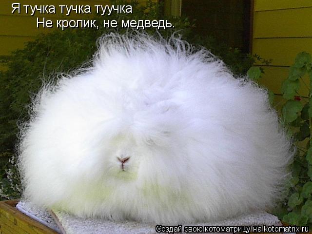 Котоматрица: Я тучка тучка туучка Не кролик, не медведь.