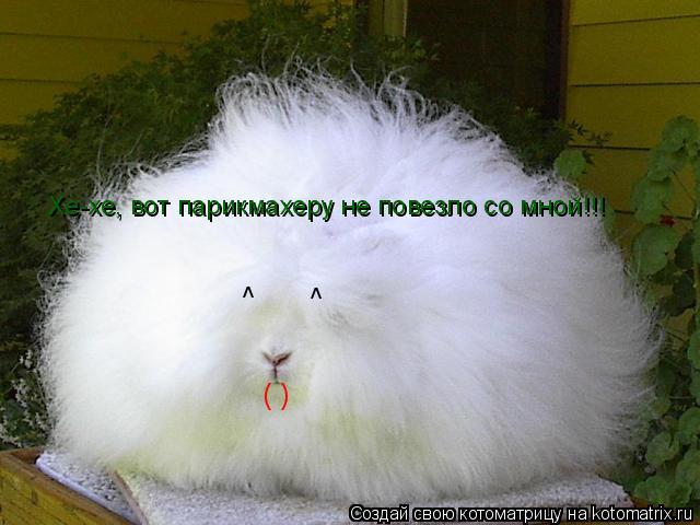 Котоматрица: Хе-хе, вот парикмахеру не повезло со мной!!! ^ ^ ( )