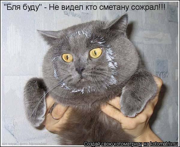 """Котоматрица: """"Бля буду"""" - Не видел кто сметану сожрал!!!"""