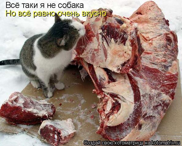 Котоматрица: Всё таки я не собака Но всё равно очень вкусно