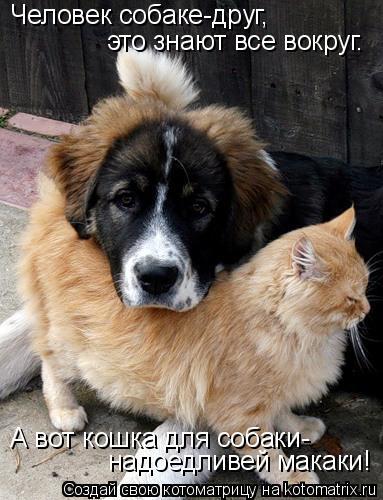 Котоматрица: Человек собаке-друг, это знают все вокруг. А вот кошка для собаки- надоедливей макаки!