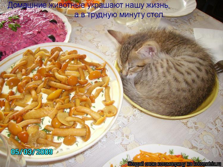 Котоматрица: Домашние животные украшают нашу жизнь,  а в трудную минуту стол.