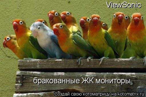 Котоматрица: ViewSonic бракованные ЖК мониторы
