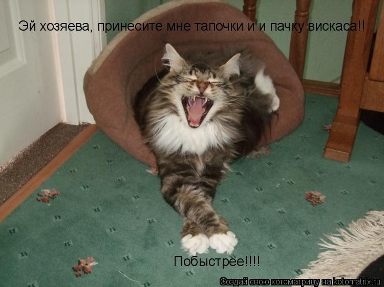 Котоматрица: Эй хозяева, принесите мне тапочки и и пачку вискаса!! Побыстрее!!!!