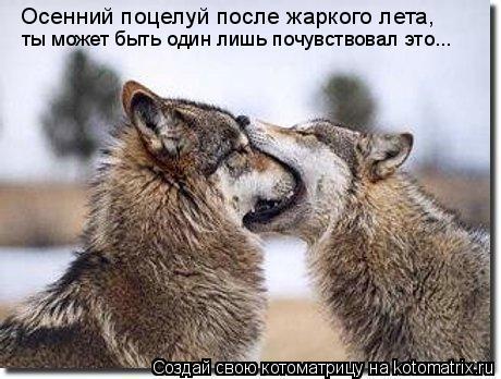 Котоматрица: Осенний поцелуй после жаркого лета, ты может быть один лишь почувствовал это...