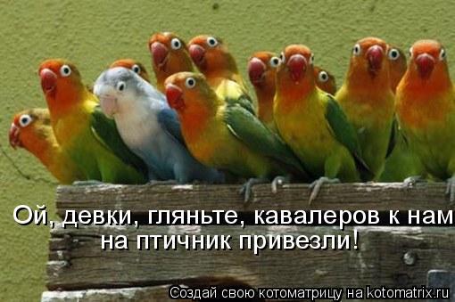 Котоматрица: Ой, девки, гляньте, кавалеров к нам на птичник привезли!