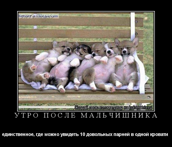 Котоматрица: утро после мальчишника  единственное, где можно увидеть 10 довольных парней в одной кровати