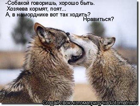 Котоматрица: -Собакой говоришь, хорошо быть.  Хозяева кормят, поят...  А, в наморднике вот так ходить? Нравиться?